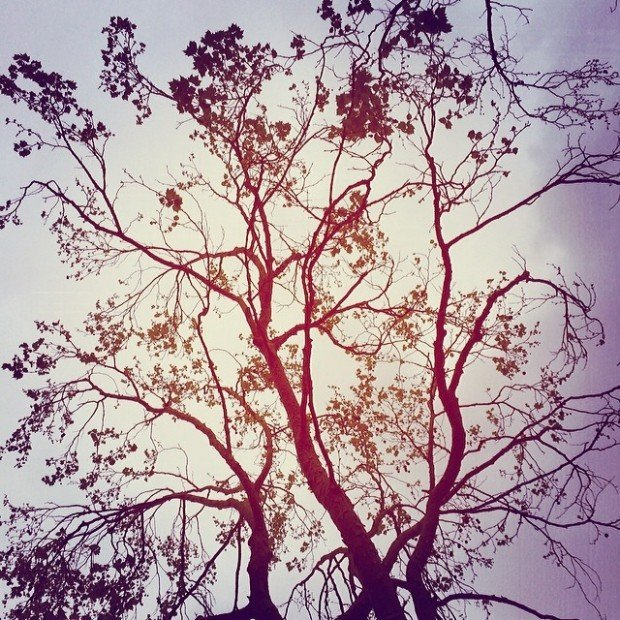Under the branches of a winter tree, I will hold you. I will be your shade. And you will be with me.