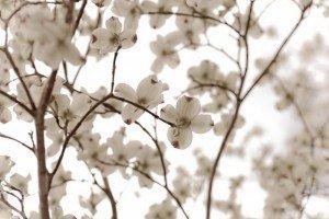 flowerpetals-300x2002