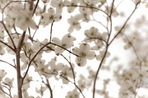 flowerpetals-300x2003