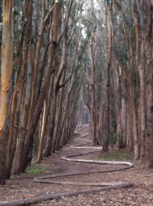 "Life is a journey...winding, quietly unfolding by faith. My birthday walk through winter Eucalyptus.""Wood Line"" by Andy Goldsworthy. SF Presidio."
