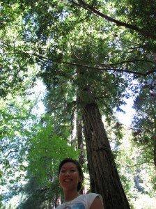 redwood-224x300