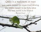wk9_Twig_Quiet2